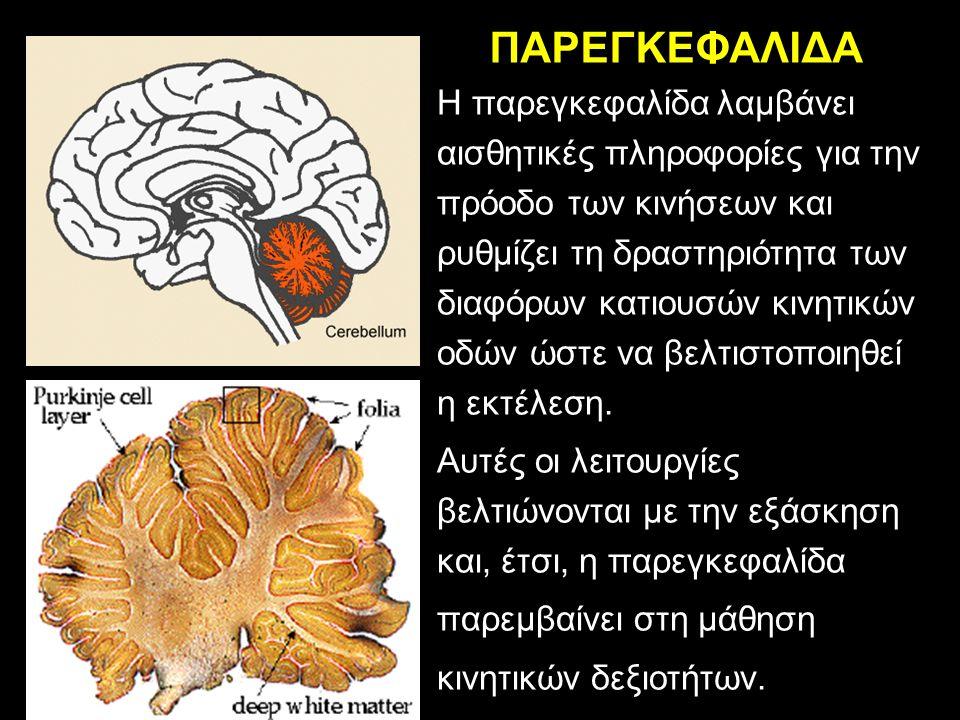 ΠΑΡΕΓΚΕΦΑΛΙΔΑ H παρεγκεφαλίδα λαμβάνει αισθητικές πληροφορίες για την πρόοδο των κινήσεων και ρυθμίζει τη δραστηριότητα των διαφόρων κατιουσών κινητικών οδών ώστε να βελτιστοποιηθεί η εκτέλεση.