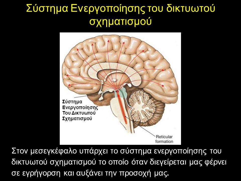 ΤΟ ΣΤΕΛΕΧΟΣ Σύστημα Ενεργοποίησης του δικτυωτού σχηματισμού Στον μεσεγκέφαλο υπάρχει το σύστημα ενεργοποίησης του δικτυωτού σχηματισμού το οποίο όταν διεγείρεται μας φέρνει σε εγρήγορση και αυξάνει την προσοχή μας.