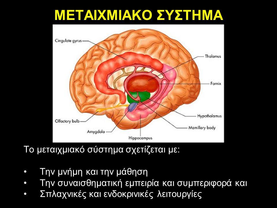ΜΕΤΑΙΧΜΙΑΚΟ ΣΥΣΤΗΜΑ Το μεταιχμιακό σύστημα σχετίζεται με: Την μνήμη και την μάθηση Την συναισθηματική εμπειρία και συμπεριφορά και Σπλαχνικές και ενδοκρινικές λειτουργίες