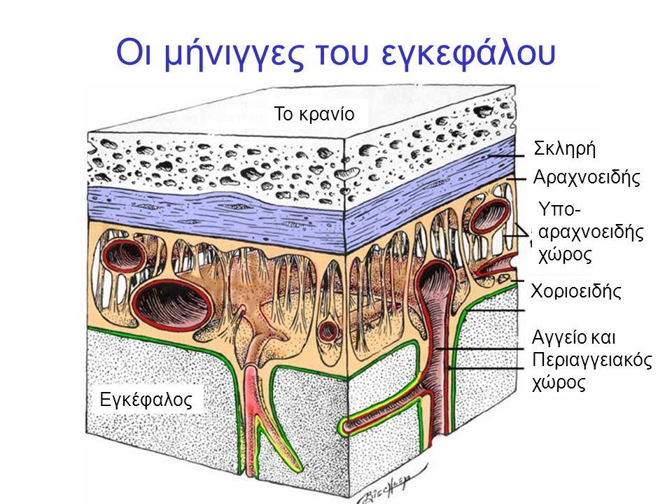 Οι μήνιγγες του εγκεφάλου Το κρανίο Σκληρή Αραχνοειδής Χοριοειδής Εγκέφαλος Υπο- αραχνοειδής χώρος Αγγείο και Περιαγγειακός χώρος