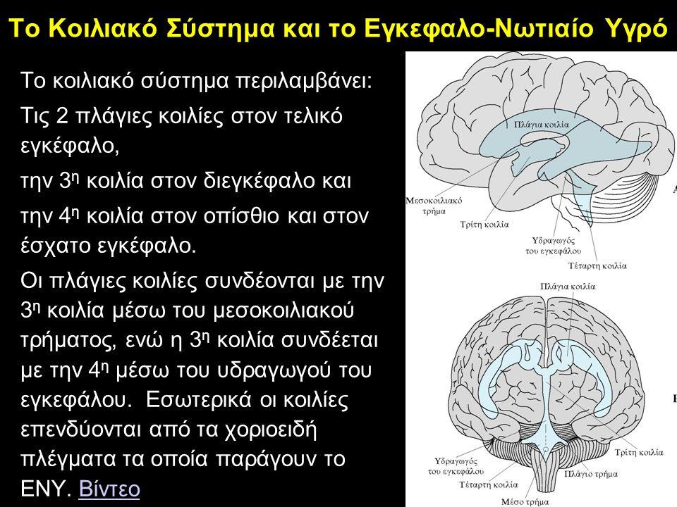 Το Κοιλιακό Σύστημα και το Εγκεφαλο-Νωτιαίο Υγρό Tο κοιλιακό σύστημα περιλαμβάνει: Τις 2 πλάγιες κοιλίες στον τελικό εγκέφαλο, την 3 η κοιλία στον διεγκέφαλο και την 4 η κοιλία στον οπίσθιο και στον έσχατο εγκέφαλο.