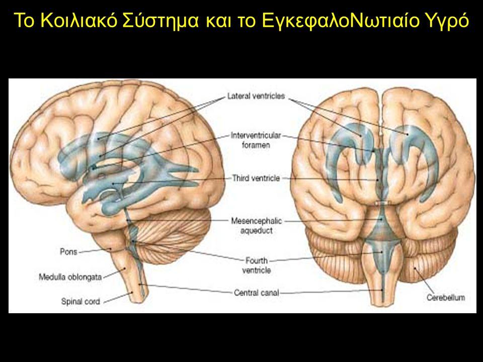 Το Κοιλιακό Σύστημα και το ΕγκεφαλοΝωτιαίο Υγρό