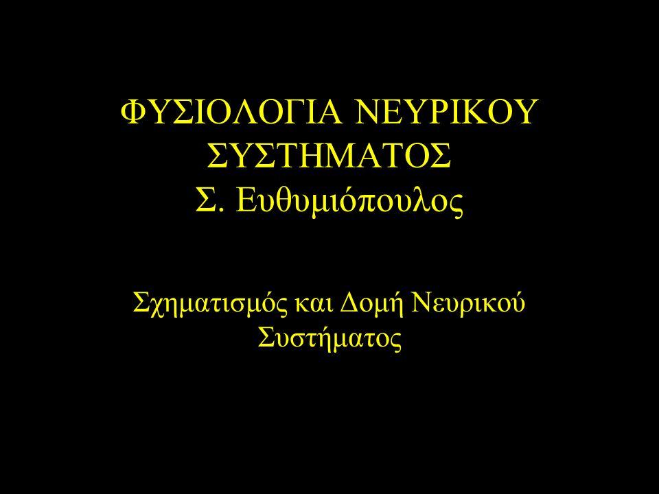 ΦΥΣΙΟΛΟΓΙΑ ΝΕΥΡΙΚΟΥ ΣΥΣΤΗΜΑΤΟΣ Σ. Ευθυμιόπουλος Σχηματισμός και Δομή Νευρικού Συστήματος