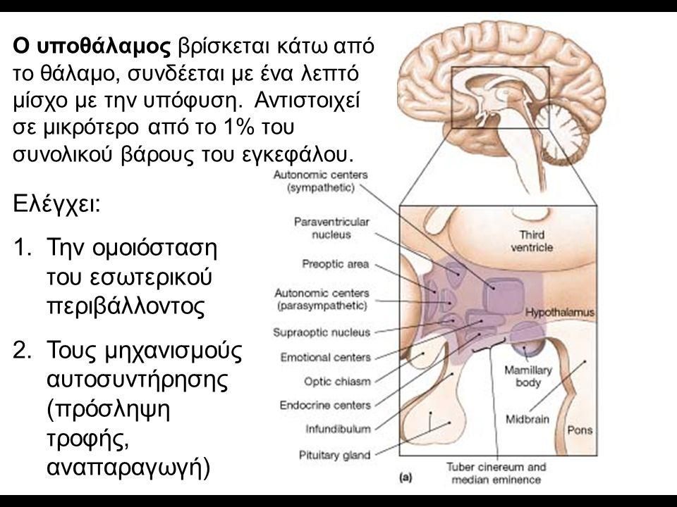 Ο υποθάλαμος βρίσκεται κάτω από το θάλαμο, συνδέεται με ένα λεπτό μίσχο με την υπόφυση.