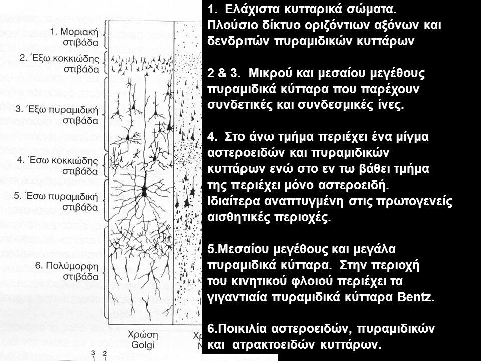 1. Ελάχιστα κυτταρικά σώματα.