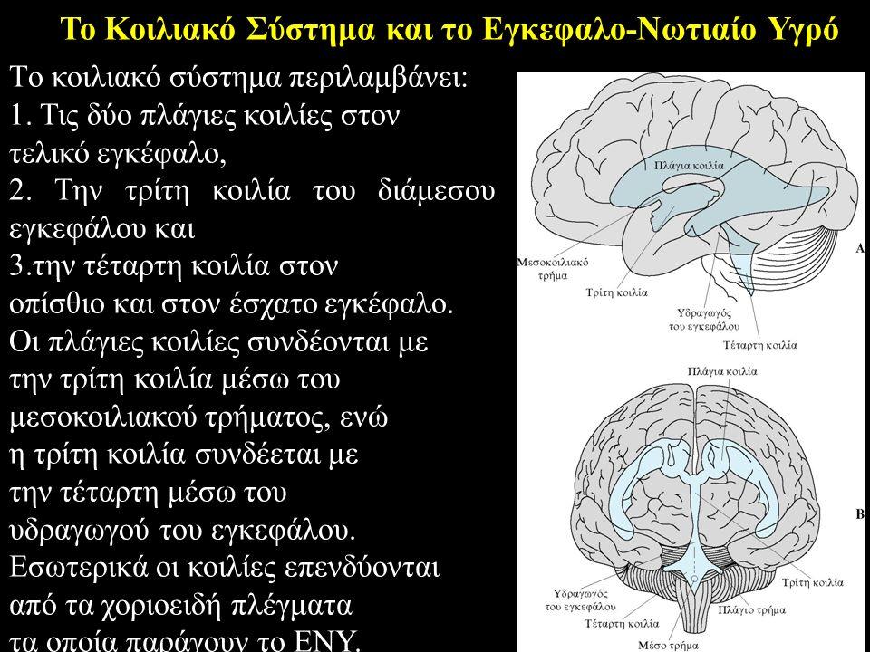 Το Κοιλιακό Σύστημα και το Εγκεφαλο-Νωτιαίο Υγρό Tο κοιλιακό σύστημα περιλαμβάνει: 1.