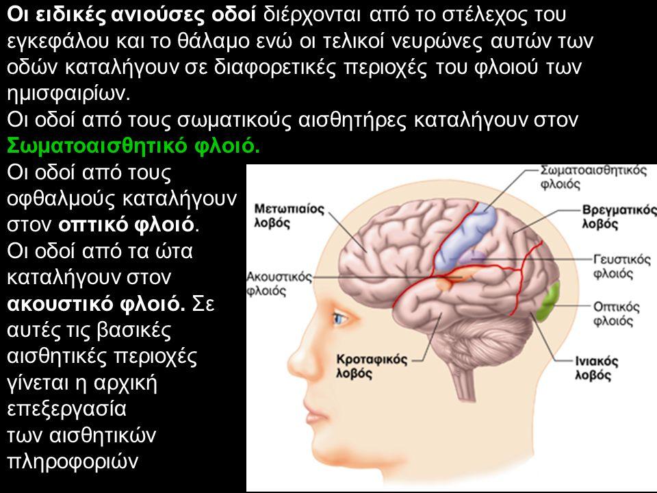Οι ειδικές ανιούσες οδοί διέρχονται από το στέλεχος του εγκεφάλου και το θάλαμο ενώ οι τελικοί νευρώνες αυτών των οδών καταλήγουν σε διαφορετικές περιοχές του φλοιού των ημισφαιρίων.
