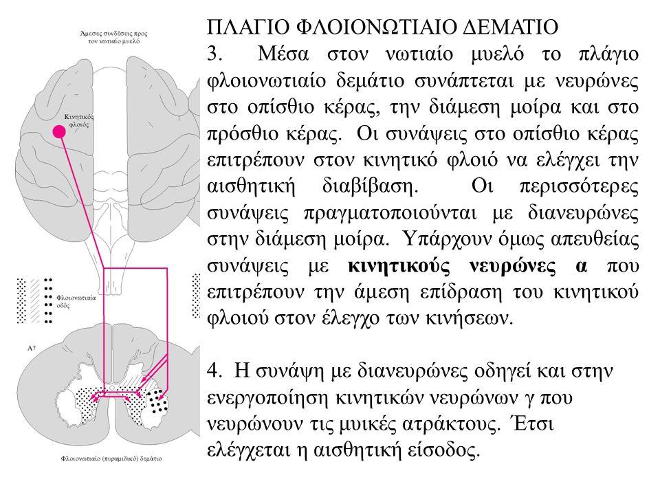 ΠΛΑΓΙΟ ΦΛΟΙΟΝΩΤΙΑΙΟ ΔΕΜΑΤΙΟ 3.