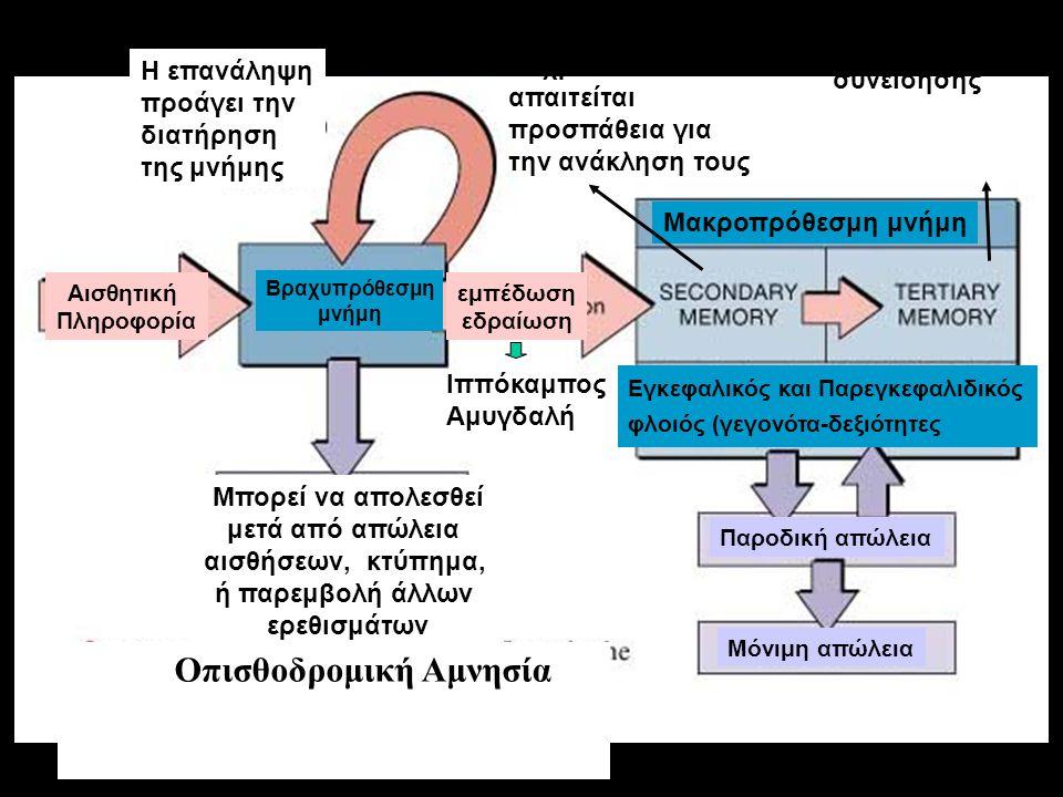 Αισθητική Πληροφορία Βραχυπρόθεσμη μνήμη Μπορεί να απολεσθεί μετά από απώλεια αισθήσεων, κτύπημα, ή παρεμβολή άλλων ερεθισμάτων Η επανάληψη προάγει την διατήρηση της μνήμης Οπισθοδρομική Αμνησία Μακροπρόθεσμη μνήμη εμπέδωση εδραίωση Εξασθενίζουν με το χρόνο και απαιτείται προσπάθεια για την ανάκληση τους Είναι μέρος της συνείδησης Ιππόκαμπος Αμυγδαλή Εγκεφαλικός και Παρεγκεφαλιδικός φλοιός (γεγονότα-δεξιότητες Παροδική απώλεια Μόνιμη απώλεια