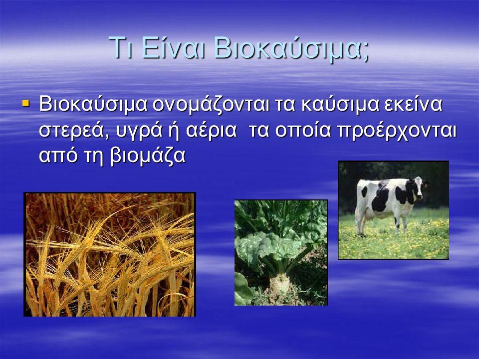 Η ενέργεια που είναι δεσμευμένη στις φυτικές ουσίες προέρχεται από τον ήλιο. Με τη διαδικασία της φωτοσύνθεσης, τα φυτά μετασχηματίζουν την ηλιακή ενέ