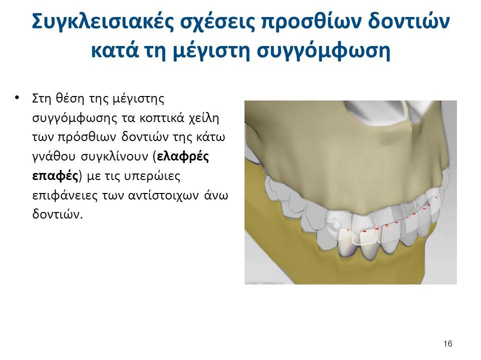 Συγκλεισιακές σχέσεις προσθίων δοντιών κατά τη μέγιστη συγγόμφωση Στη θέση της μέγιστης συγγόμφωσης τα κοπτικά χείλη των πρόσθιων δοντιών της κάτω γνάθου συγκλίνουν (ελαφρές επαφές) με τις υπερώιες επιφάνειες των αντίστοιχων άνω δοντιών.