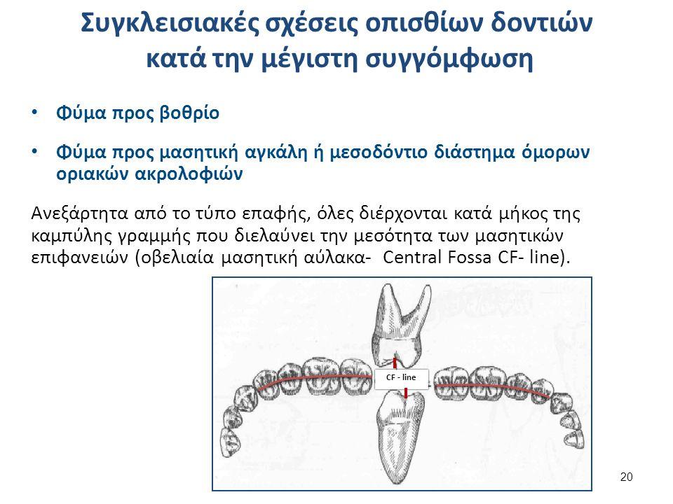 Συγκλεισιακές σχέσεις οπισθίων δοντιών κατά την μέγιστη συγγόμφωση Φύμα προς βοθρίο Φύμα προς μασητική αγκάλη ή μεσοδόντιο διάστημα όμορων οριακών ακρολοφιών Ανεξάρτητα από το τύπο επαφής, όλες διέρχονται κατά μήκος της καμπύλης γραμμής που διελαύνει την μεσότητα των μασητικών επιφανειών (οβελιαία μασητική αύλακα- Central Fossa CF- line).
