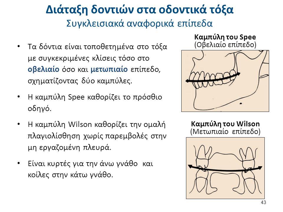 Τα δόντια είναι τοποθετημένα στο τόξα με συγκεκριμένες κλίσεις τόσο στο οβελιαίο όσο και μετωπιαίο επίπεδο, σχηματίζοντας δύο καμπύλες.