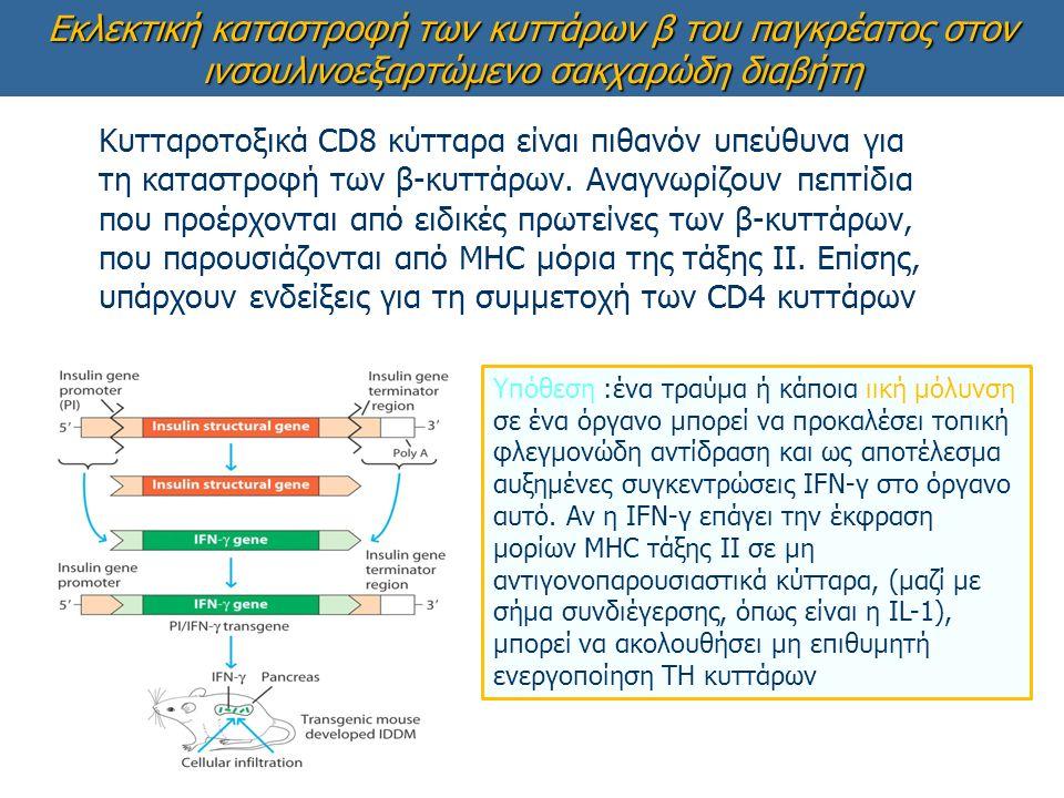 Εκλεκτική καταστροφή των κυττάρων β του παγκρέατος στον ινσουλινοεξαρτώμενο σακχαρώδη διαβήτη Υπόθεση :ένα τραύμα ή κάποια ιική μόλυνση σε ένα όργανο μπορεί να προκαλέσει τοπική φλεγμονώδη αντίδραση και ως αποτέλεσμα αυξημένες συγκεντρώσεις IFN-γ στο όργανο αυτό.