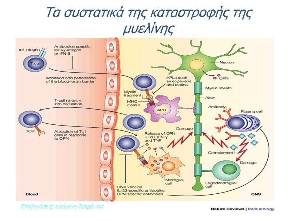 Τα συστατικά της καταστροφής της μυελίνης Επεξηγήσεις: επόμενη διαφάνεια