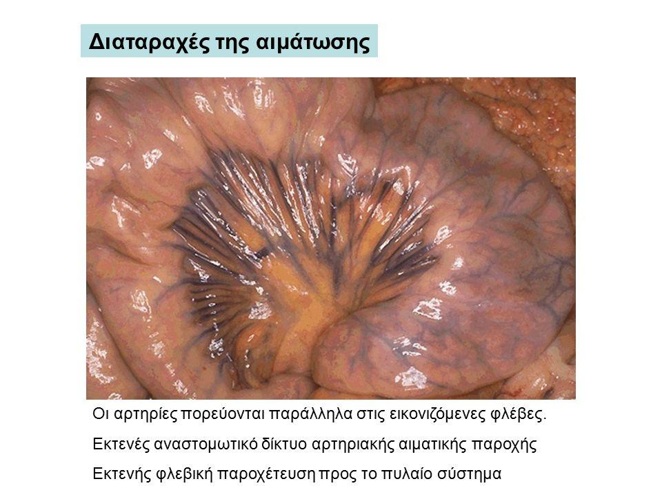 Οι αρτηρίες πορεύονται παράλληλα στις εικονιζόμενες φλέβες. Εκτενές αναστομωτικό δίκτυο αρτηριακής αιματικής παροχής Εκτενής φλεβική παροχέτευση προς