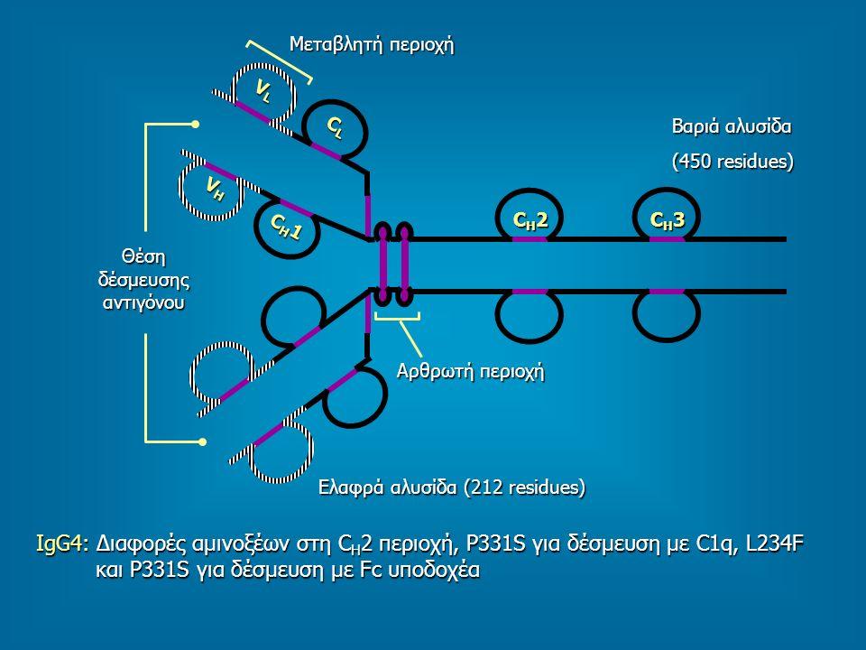 Βαριά αλυσίδα (450 residues) Αρθρωτή περιοχή Ελαφρά αλυσίδα (212 residues) Μεταβλητή περιοχή Θέση δέσμευσης αντιγόνου CH2CH2CH2CH2 CH3CH3CH3CH3 CH1CH1CH1CH1 VHVHVHVH VLVLVLVL CLCLCLCL IgG4: Διαφορές αμινοξέων στη C H 2 περιοχή, Ρ331S για δέσμευση με C1q, L234F και P331S για δέσμευση με Fc υποδοχέα