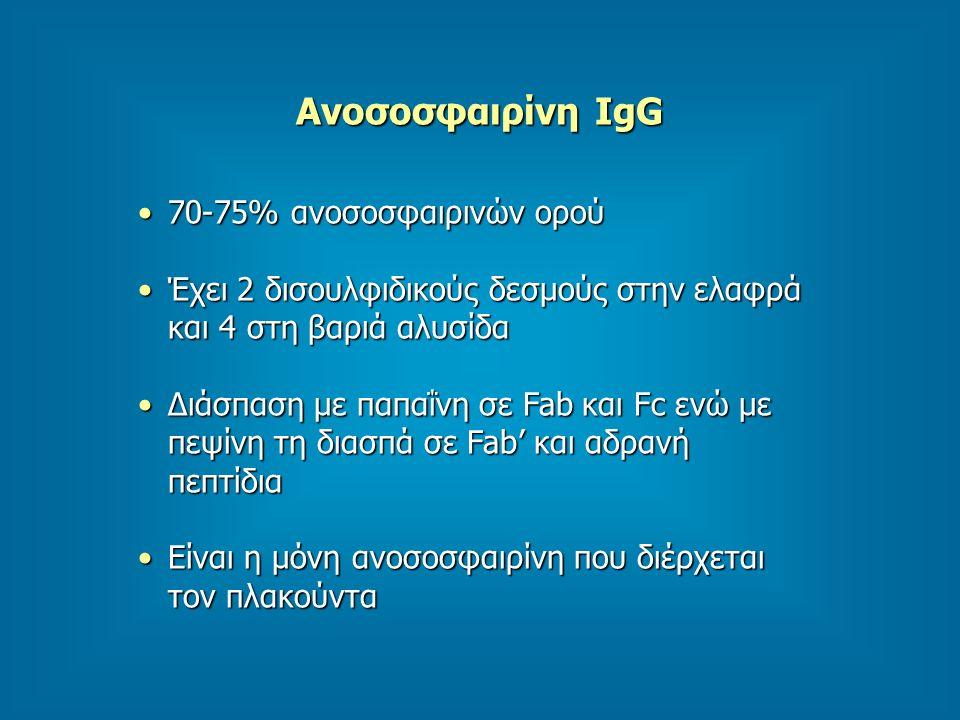 Ανοσοσφαιρίνη IgG 70-75% ανοσοσφαιρινών ορού70-75% ανοσοσφαιρινών ορού Έχει 2 δισουλφιδικούς δεσμούς στην ελαφρά και 4 στη βαριά αλυσίδαΈχει 2 δισουλφιδικούς δεσμούς στην ελαφρά και 4 στη βαριά αλυσίδα Διάσπαση με παπαΐνη σε Fab και Fc ενώ με πεψίνη τη διασπά σε Fab' και αδρανή πεπτίδιαΔιάσπαση με παπαΐνη σε Fab και Fc ενώ με πεψίνη τη διασπά σε Fab' και αδρανή πεπτίδια Είναι η μόνη ανοσοσφαιρίνη που διέρχεται τον πλακούνταΕίναι η μόνη ανοσοσφαιρίνη που διέρχεται τον πλακούντα