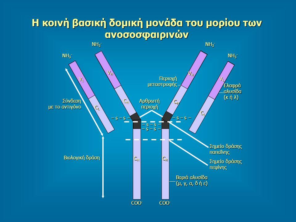 Η κοινή βασική δομική μονάδα του μορίου των ανοσοσφαιρινών CHCHCHCH CHCHCHCH CLCLCLCL VLVLVLVL CHCHCHCH VHVHVHVH CHCHCHCH VHVHVHVH CLCLCLCL VLVLVLVL N