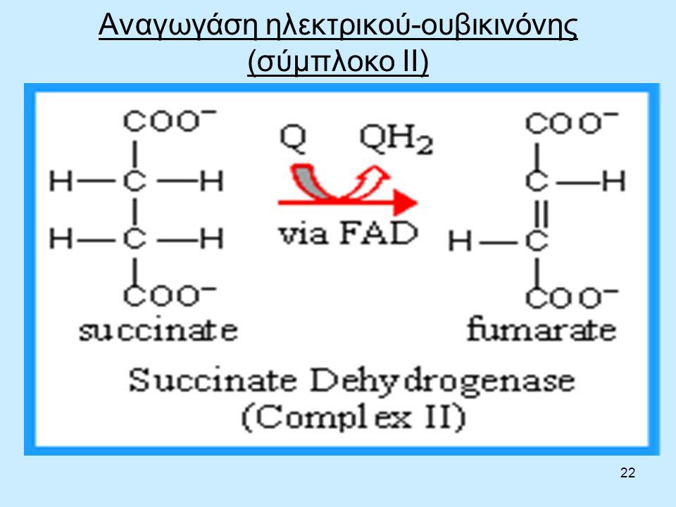 22 Αναγωγάση ηλεκτρικού-ουβικινόνης (σύμπλοκο II)
