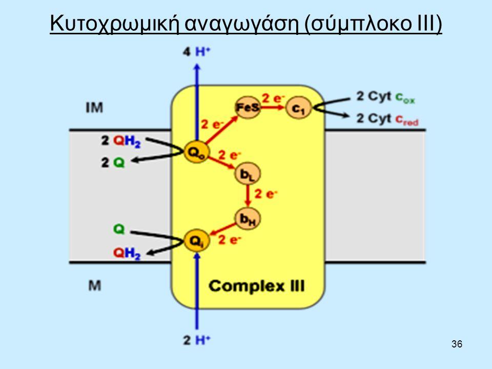 36 Κυτοχρωμική αναγωγάση (σύμπλοκο III)