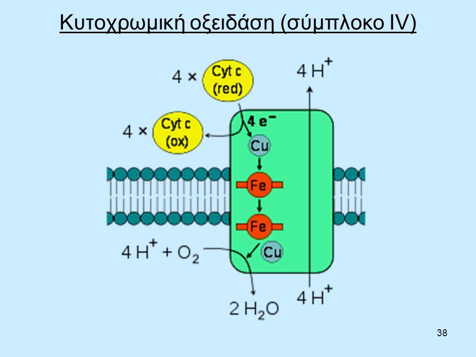 38 Κυτοχρωμική οξειδάση (σύμπλοκο IV)