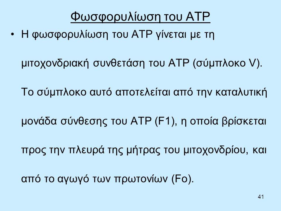 41 Φωσφορυλίωση του ΑΤΡ Η φωσφορυλίωση του ΑΤΡ γίνεται με τη μιτοχονδριακή συνθετάση του ΑΤΡ (σύμπλοκο V).