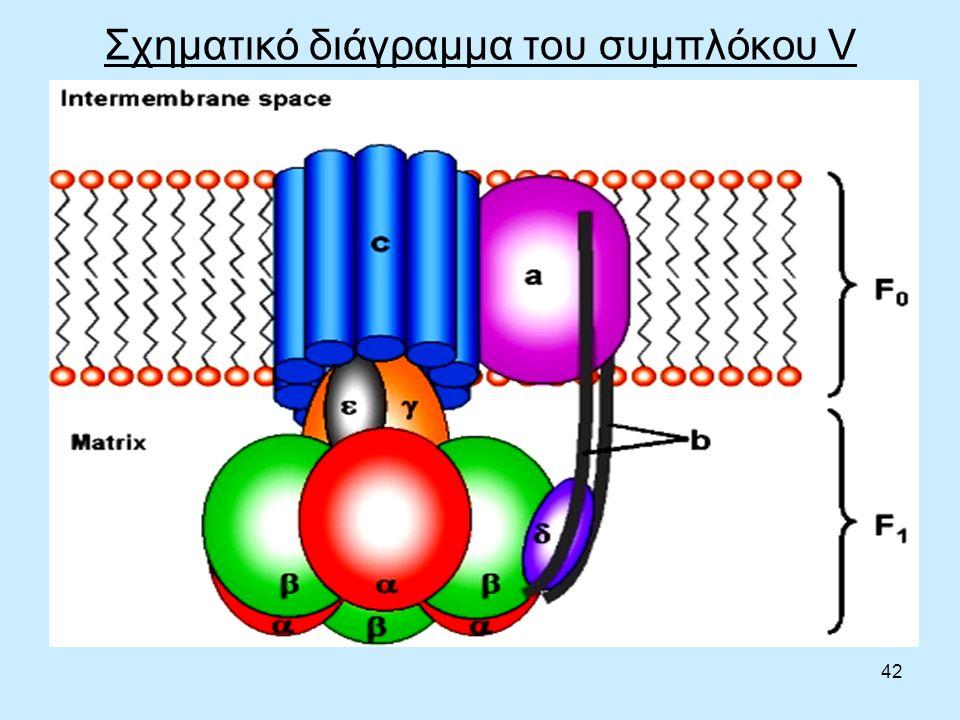 42 Σχηματικό διάγραμμα του συμπλόκου V