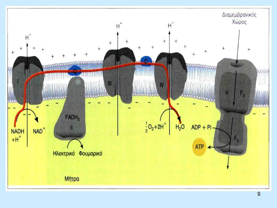 10 Σύμπλοκα της οξειδωτικής φωσφορυλίωσης