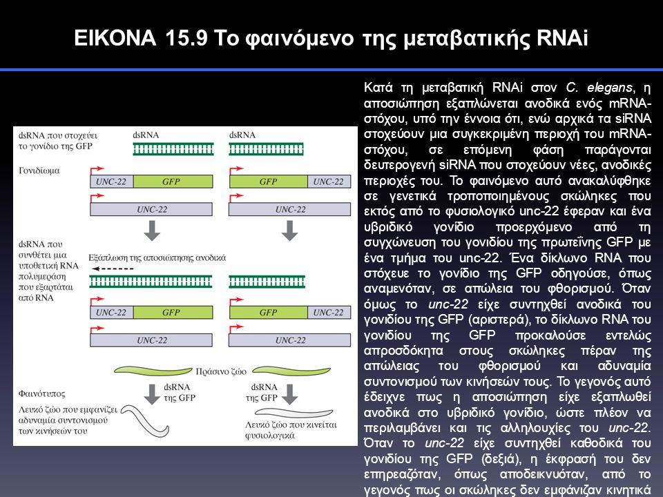 ΕΙΚΟΝΑ 15.9 Το φαινόμενο της μεταβατικής RNAi Κατά τη μεταβατική RNAi στον C.