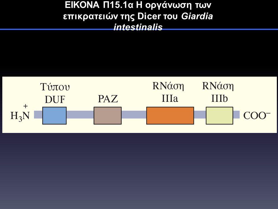 ΕΙΚΟΝΑ Π15.1α Η οργάνωση των επικρατειών της Dicer του Giardia intestinalis