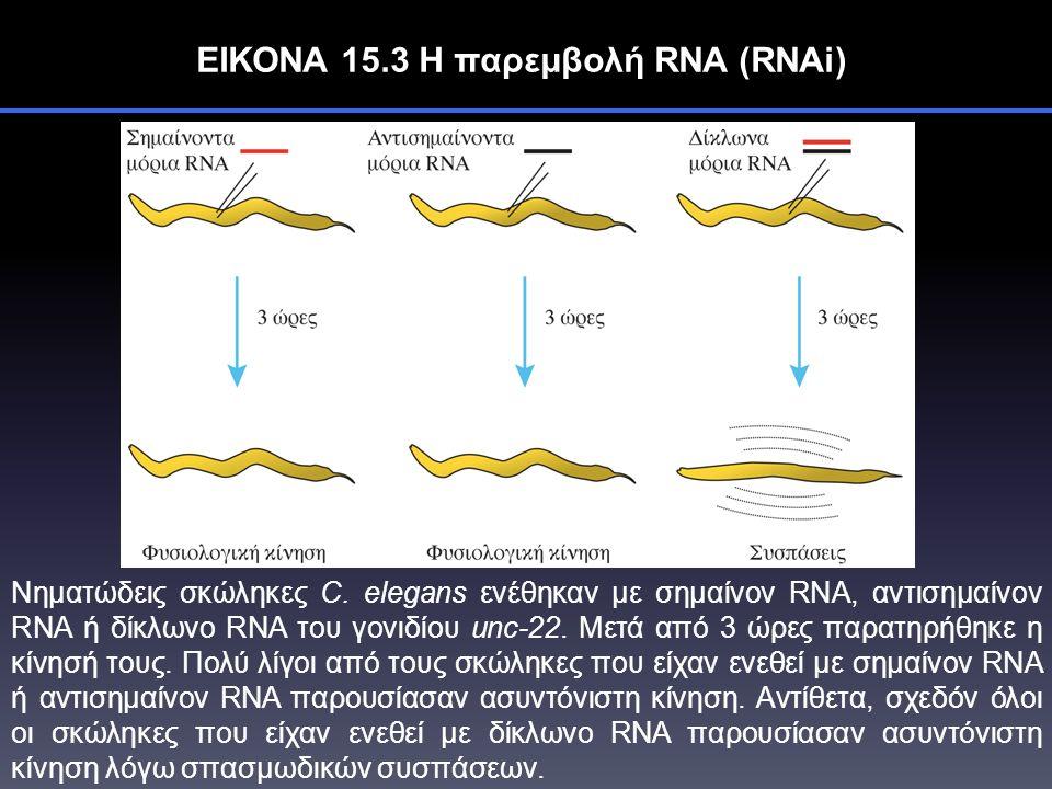 ΕΙΚΟΝΑ 15.3 Η παρεμβολή RNA (RNAi) Νηματώδεις σκώληκες C.