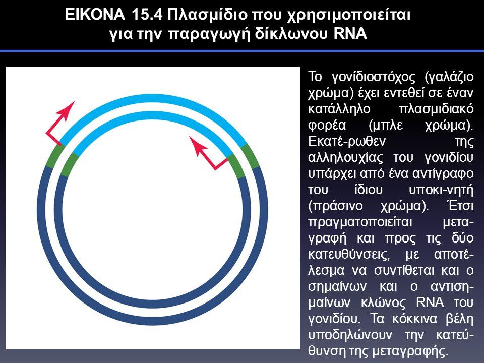 ΕΙΚΟΝΑ 15.4 Πλασμίδιο που χρησιμοποιείται για την παραγωγή δίκλωνου RNA Το γονίδιοστόχος (γαλάζιο χρώμα) έχει εντεθεί σε έναν κατάλληλο πλασμιδιακό φορέα (μπλε χρώμα).