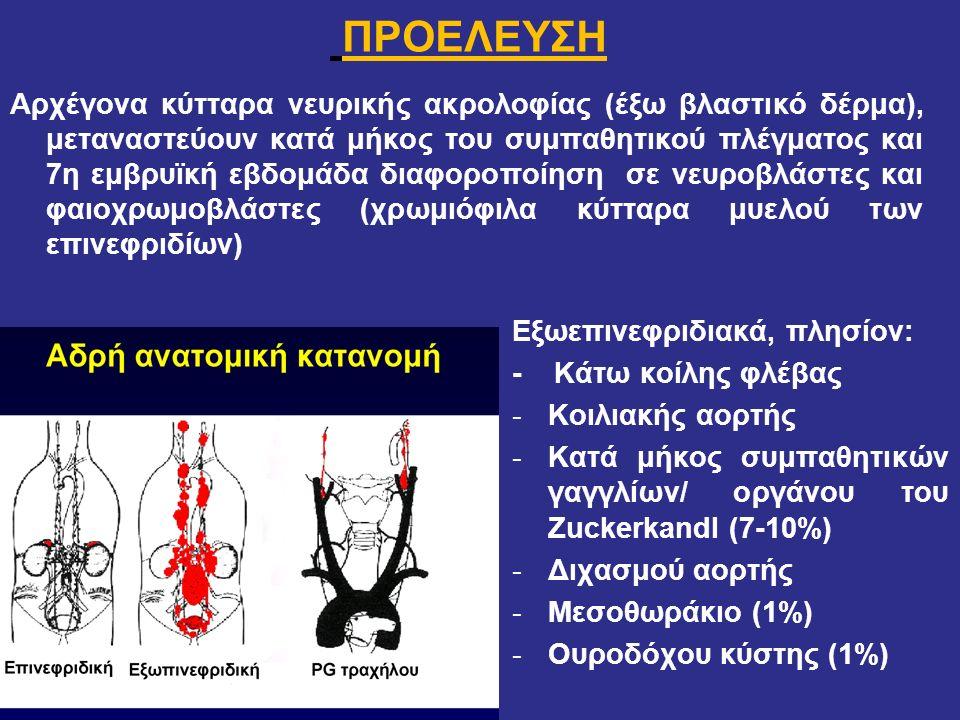 ΠΡΟΕΛΕΥΣΗ Αρχέγονα κύτταρα νευρικής ακρολοφίας (έξω βλαστικό δέρμα), μεταναστεύουν κατά μήκος του συμπαθητικού πλέγματος και 7η εμβρυϊκή εβδομάδα διαφ