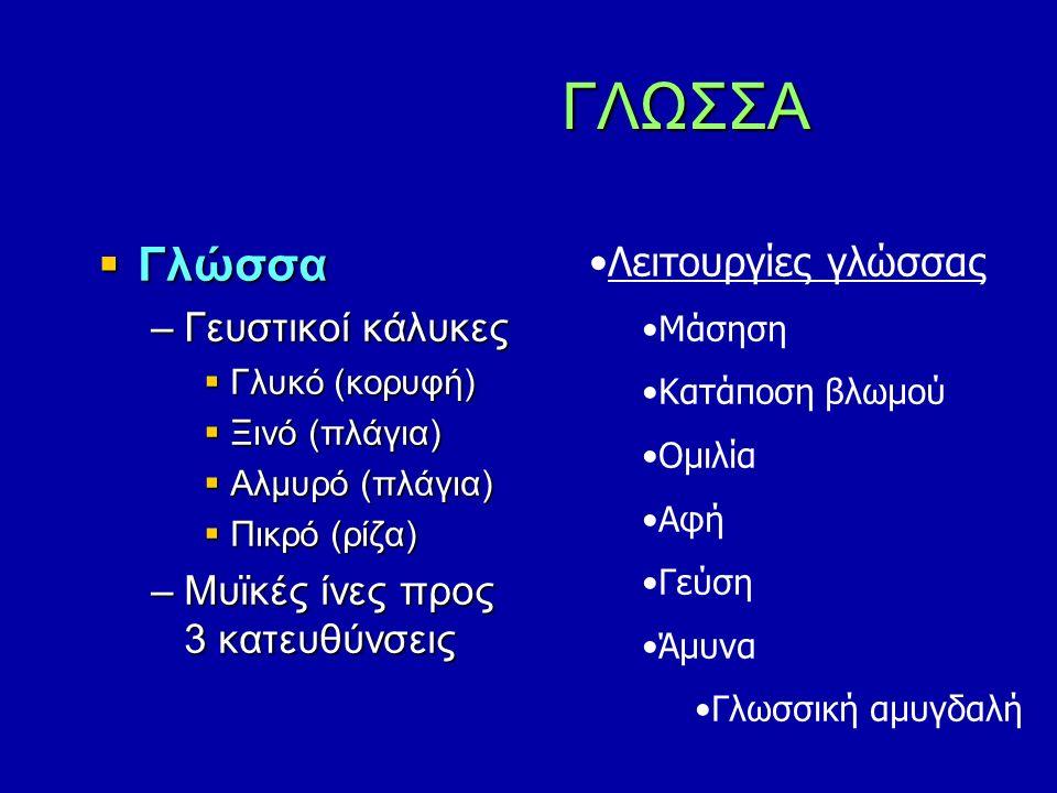  Γλώσσα –Γευστικοί κάλυκες  Γλυκό (κορυφή)  Ξινό (πλάγια)  Αλμυρό (πλάγια)  Πικρό (ρίζα) –Μυϊκές ίνες προς 3 κατευθύνσεις ΓΛΩΣΣΑ ΓΛΩΣΣΑ Λειτουργίες γλώσσας Μάσηση Κατάποση βλωμού Ομιλία Αφή Γεύση Άμυνα Γλωσσική αμυγδαλή