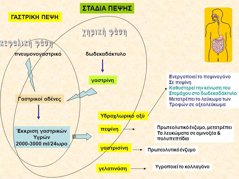 ΣΤΑΔΙΑ ΠΕΨΗΣ ΓΑΣΤΡΙΚΗ ΠΕΨΗ πνευμονογαστρικό Γαστρικοί αδένες Έκκριση γαστρικών Υγρών 2000-3000 ml/24ωρο δωδεκαδάκτυλο γαστρίνη Υδροχλωρικό οξύ πεψίνη γαστρισίνη γελατινάση Ενεργοποιεί το πεψινογόνο Σε πεψίνη Καθυστερεί την κένωση του Στομάχου στο δωδεκαδάκτυλο Μετατρέπει το λεύκωμα των Τροφών σε οξεολεύκωμα Πρωτεολυτικό ένζυμο, μετατρέπει Τα λευκώματα σε αμινοξέα & πολυπεπτίδια Πρωτεολυτικό ένζυμο Υγροποιεί το κολλαγόνο