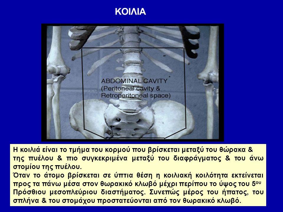 ΚΟΙΛΙΑ Το περιεχόμενο της κοιλιάς: Περιτοναική κοιλότητα Όργανα γαστρεντερικού συστήματος οισοφάγο στομάχι έντερο Ήπαρ & χοληφόρα αγγεία Πάγκρεας Επινεφρίδια Νεφροί & ανώτερη μοίρα του Ουρητήρα Νεύρα – λεμφαγγεία – αιμοφόρα αγγεία