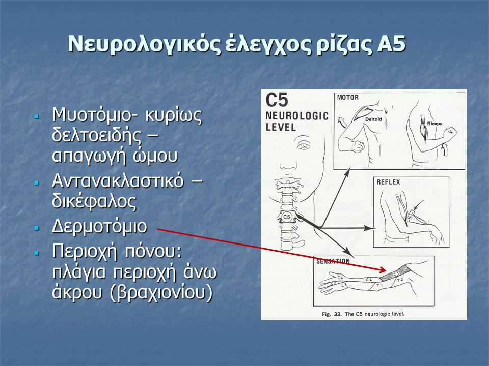  Μυοτόμιο- κυρίως δελτοειδής – απαγωγή ώμου  Αντανακλαστικό – δικέφαλος  Δερμοτόμιο  Περιοχή πόνου: πλάγια περιοχή άνω άκρου (βραχιονίου) Νευρολογικός έλεγχος ρίζας Α5