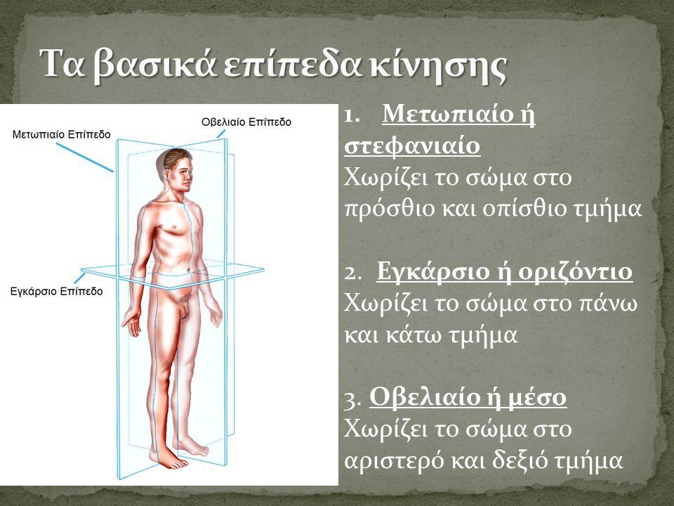 1.Μετωπιαίο ή στεφανιαίο Χωρίζει το σώμα στο πρόσθιο και οπίσθιο τμήμα 2.
