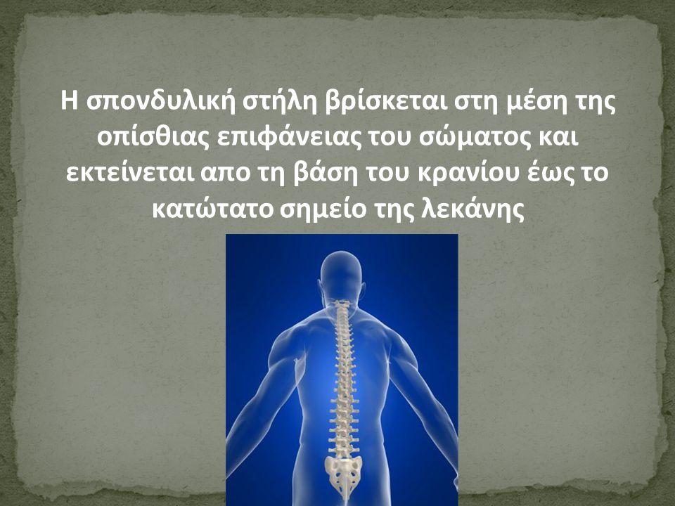 Η σπονδυλική στήλη βρίσκεται στη μέση της οπίσθιας επιφάνειας του σώματος και εκτείνεται απο τη βάση του κρανίου έως το κατώτατο σημείο της λεκάνης