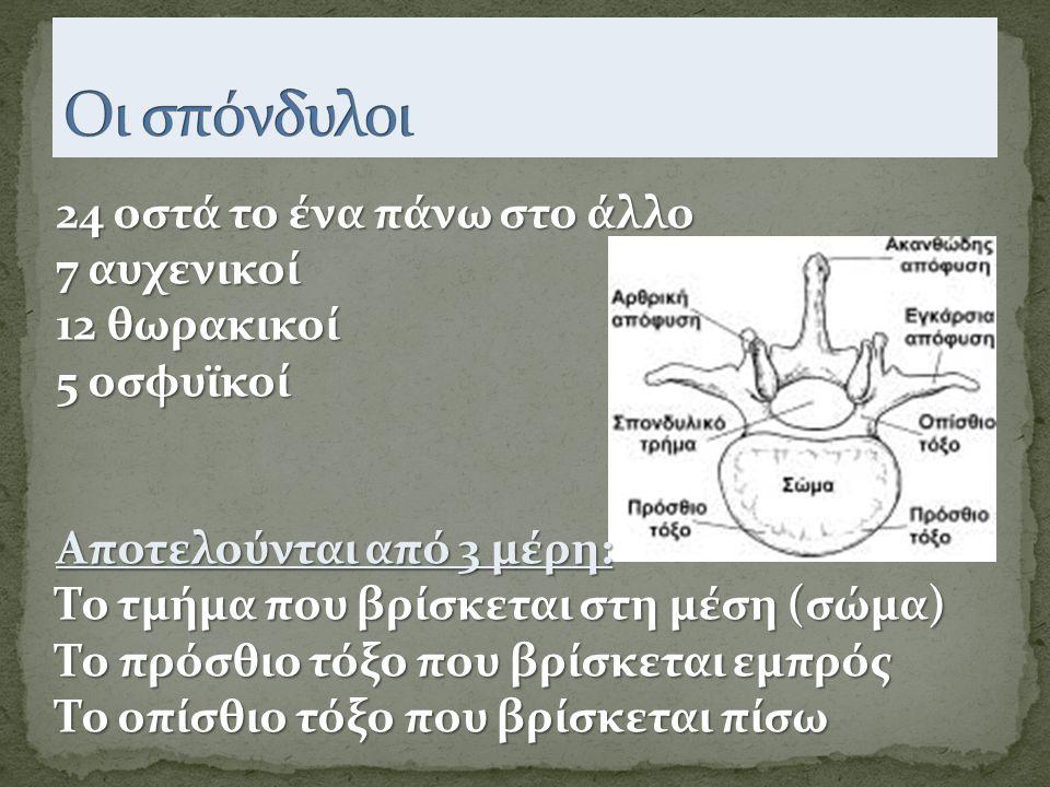 24 οστά το ένα πάνω στο άλλο 7 αυχενικοί 12 θωρακικοί 5 οσφυϊκοί Αποτελούνται από 3 μέρη: Το τμήμα που βρίσκεται στη μέση (σώμα) Το πρόσθιο τόξο που βρίσκεται εμπρός Το οπίσθιο τόξο που βρίσκεται πίσω