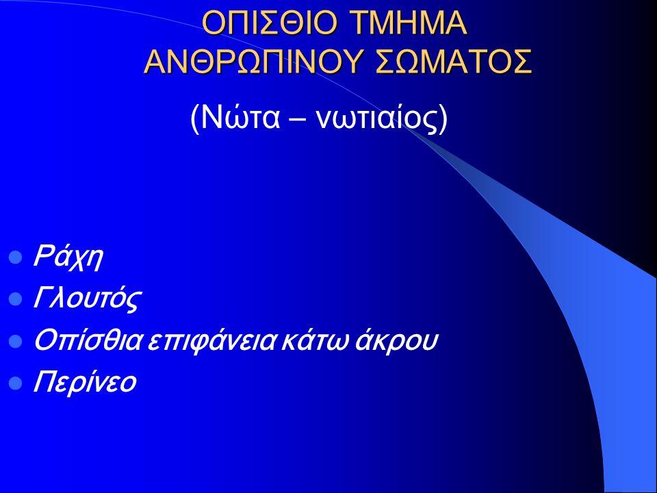 ΟΠΙΣΘΙΟ ΤΜΗΜΑ ΑΝΘΡΩΠΙΝΟΥ ΣΩΜΑΤΟΣ (Νώτα – νωτιαίος) Ράχη Γλουτός Οπίσθια επιφάνεια κάτω άκρου Περίνεο