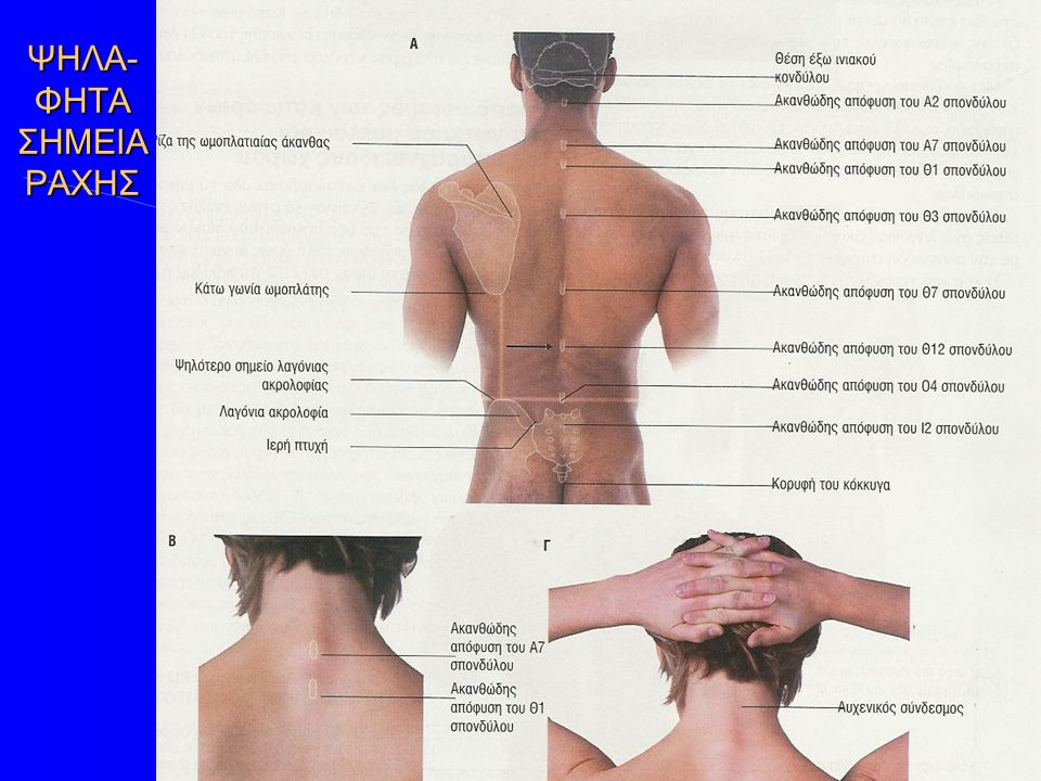 Γεννητικά όργανα γυναίκας και μύες περινέου