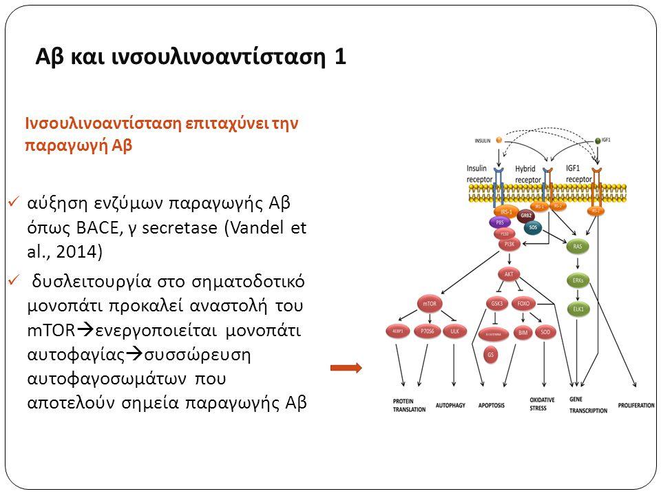 Αβ και ινσουλινοαντίσταση 1 Ινσουλινοαντίσταση επιταχύνει την παραγωγή Αβ αύξηση ενζύμων παραγωγής Αβ όπως BACE, γ secretase (Vandel et al., 2014) δυσλειτουργία στο σηματοδοτικό μονοπάτι προκαλεί αναστολή του mTOR  ενεργοποιείται μονοπάτι αυτοφαγίας  συσσώρευση αυτοφαγοσωμάτων που αποτελούν σημεία παραγωγής Αβ