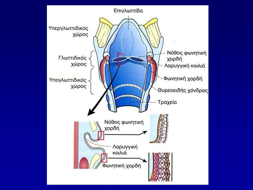 Βασική λειτουργία Αποτελεί την είσοδο του εισπνεόμενου αέρα στις κατώτερες αναπνευστικές οδούς Οργανο παραγωγής φωνής