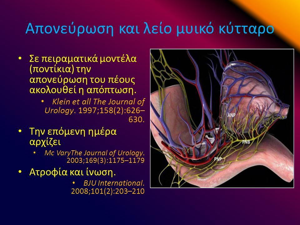 Απονεύρωση και λείο μυικό κύτταρο Σε πειραματικά μοντέλα (ποντίκια) την απονεύρωση του πέους ακολουθεί η απόπτωση.