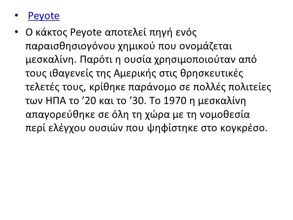 Peyote Ο κάκτος Peyote αποτελεί πηγή ενός παραισθησιογόνου χημικού που ονομάζεται μεσκαλίνη.