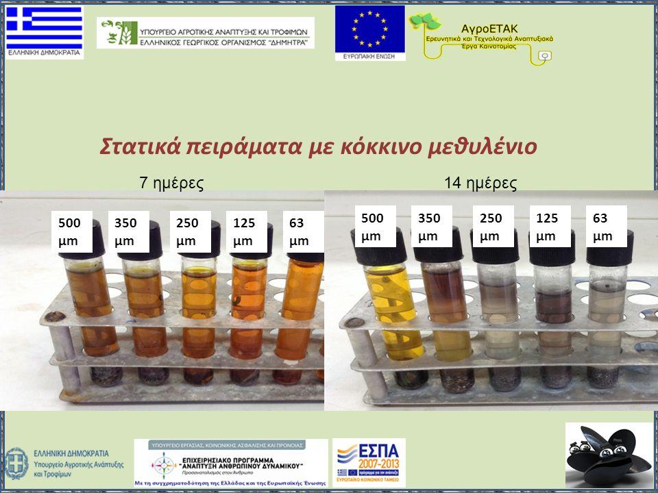 500 μm 350 μm 250 μm 125 μm 63 μm 500 μm 350 μm 250 μm 125 μm 63 μm 7 ημέρες14 ημέρες Στατικά πειράματα με κόκκινο μεθυλένιο