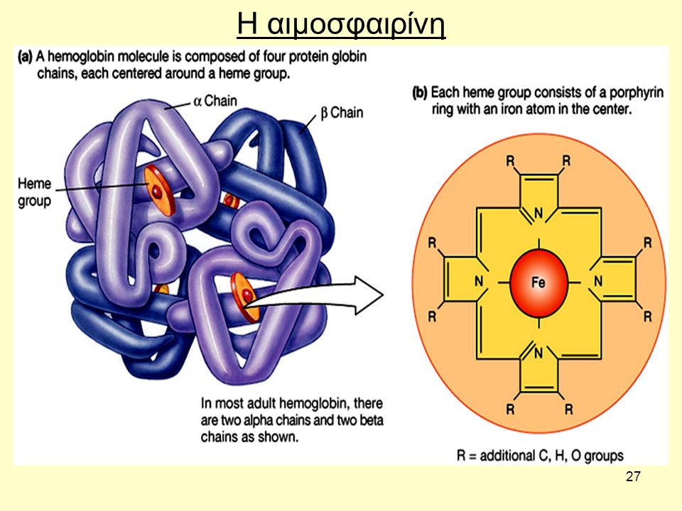 27 Η αιμοσφαιρίνη