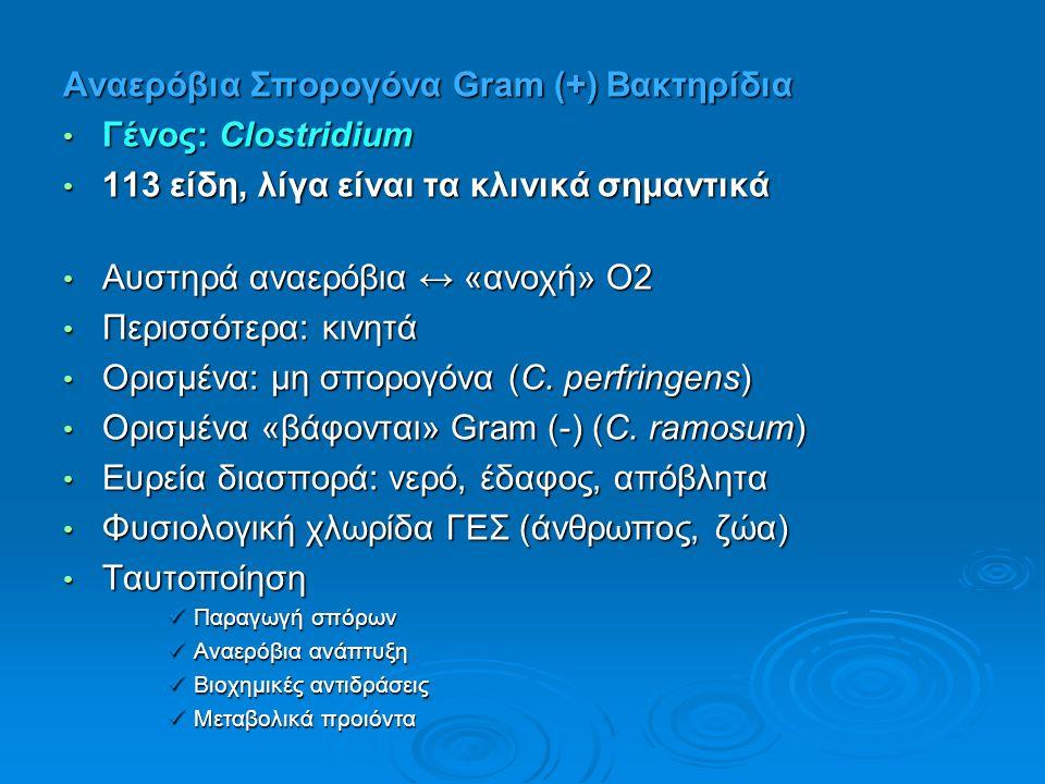 Aναερόβια Σπορογόνα Gram (+) Βακτηρίδια Γένος: Clostridium Γένος: Clostridium 113 είδη, λίγα είναι τα κλινικά σημαντικά 113 είδη, λίγα είναι τα κλινικά σημαντικά Αυστηρά αναερόβια ↔ «ανοχή» Ο2 Αυστηρά αναερόβια ↔ «ανοχή» Ο2 Περισσότερα: κινητά Περισσότερα: κινητά Ορισμένα: μη σπορογόνα (C.